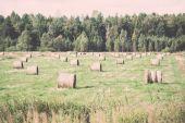 Rolls of hay in green field - retro, vintage — Stock Photo
