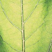 Leaf macro pattern of green - retro, vintage — Stock Photo