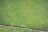 Leaf macro pattern of green - retro, vintage — Foto de Stock
