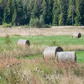 卷的干草在绿色的田野 — 图库照片