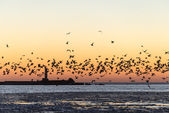 Birds flying in sunset over frozen sea — Stock Photo