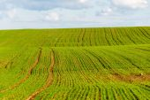 Beautiful green fields under blue sky in summer — Stock Photo