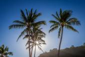 Sun through the palm tree — Stock Photo