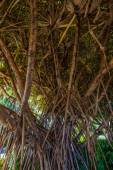 Under the banyan tree — Photo