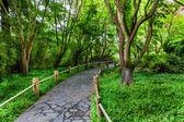 Stoned pathway  — Foto Stock