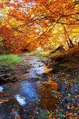 Lindo outono — Foto Stock