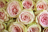 Abstract  roses — Stock Photo