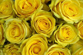 Close up of yellow roses on the market — Stock Photo
