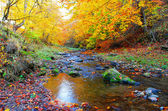 Beautiful autumn in the forest — Stock Photo