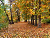 Autumn in Armenia — Stock Photo