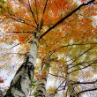 Autumn birch against the sky — Stock Photo #56793483
