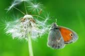 Piękny motyl — Zdjęcie stockowe