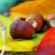 Brown acorns on autumn leaves, close up — Stock Photo #59125789