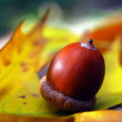 Brown acorns on autumn leaves, close up — Stock Photo #59125799