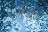 Painted the beauty of frost — Photo