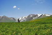Spring in the mountains of Armenia — Stock Photo