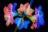 Abstract flower background — Stockfoto