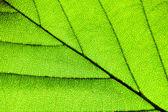 Yeşil yaprakları arka plan — Stok fotoğraf