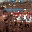 Old river ships become for the winter (North Russia) — Stock Video #59450977