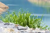 Green grass 005 — Stock Photo