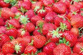 Strawberry texture - filled frame — Zdjęcie stockowe