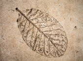 Low relief leaf on cement — Stock Photo