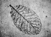 Low relief leaf on cement black and white — Stock Photo