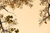 Back ground tree Oreage — Stock Photo