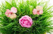 Group of pink flowers — Stock Photo