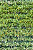 Flower wall — Stock Photo