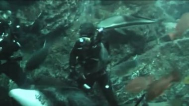 Diver in oceanarium feeding fish — Stock Video