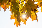Beautiful Autumn Leaves with Sunlight Shining — Stock Photo
