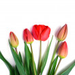 Bunch of red tulips bouquet isolated on white background — Stock Photo #70749027