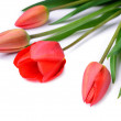 Bouquet of red tulips isolated on white background — Stock Photo #70749455