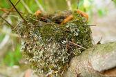 Empty bird nest in a tree — Stock Photo