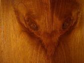Rat face on wood — Stock Photo
