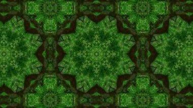 Kaleidoscope green tree — Stok video
