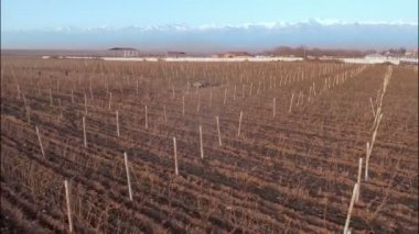 Vineyard with snowy mountains — Stock Video