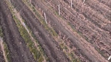 Vineyard with snowy mountains — Stok video