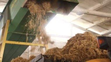 Combine harvesting wheat. — Stock Video