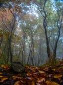 Beautiful forest in fog — Fotografia Stock