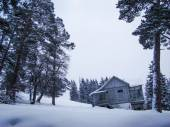 Wooden house in pine forest — Stock Photo