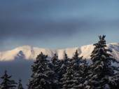 Snowy mountains and pine forest — Stock Photo