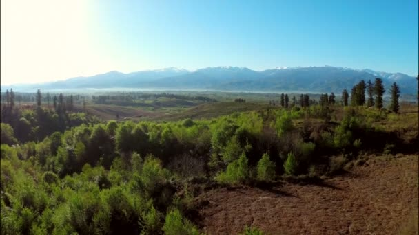 Mountains with forest and meadow — Vidéo