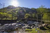 Georgia's nature in summer — Stock Photo