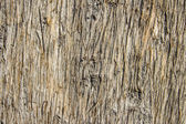 Tree bark seamless background — Stock Photo
