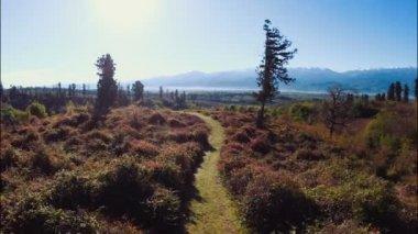 Georgia's nature in summer — Stock Video