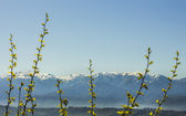 Mountain range with green nature — Foto de Stock