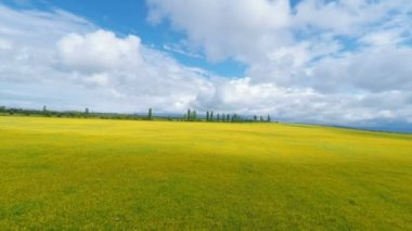 Aerial view of yellow field under cloudy sky — Stock Video
