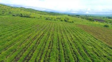 Vista aérea de vineards en Georgia, kakheti — Vídeo de Stock